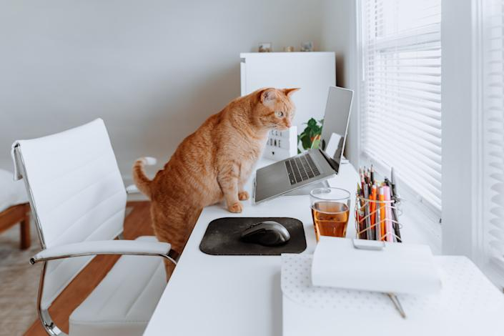 Cat on a work desk at home during quarantine