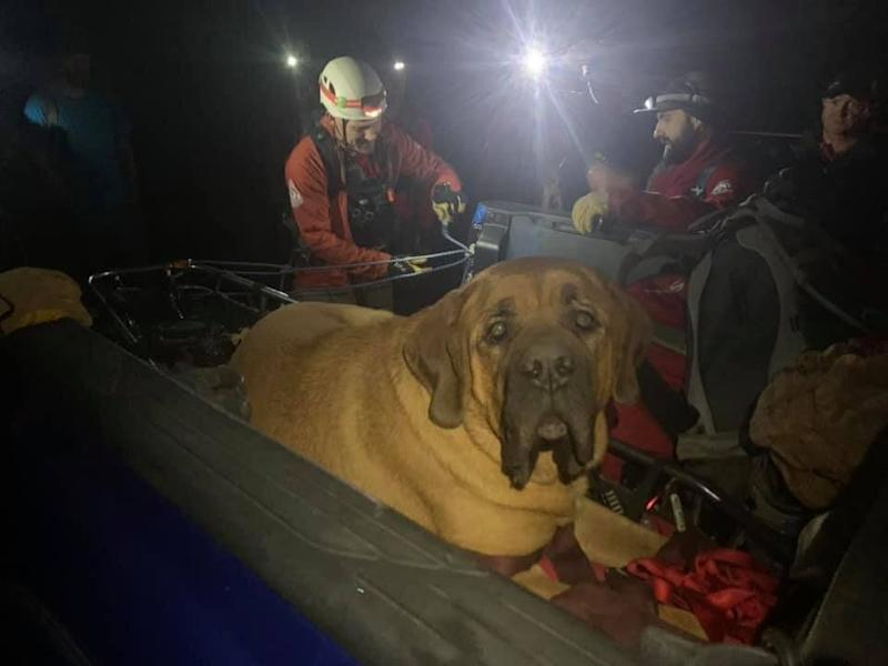 Members of the Salt Lake County Sheriff's Search and Rescue squad in Utah proved friends in need for Floyd when a mountain hike left the huge dog exhausted. (Photo: Shawn Kenney/Salt Lake County Sheriff's Search and Rescue)