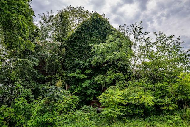 <p>Abandoned home consumed by ivy in Ohio. (Photo:Johnny Joo/Caters News) </p>