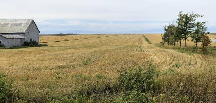 A field of grain stretches to the St. Lawrence River from a quiet country road outside Kamouraska, Quebec, on Sept. 9, 2021. The maritime panoramas and bicycle-friendly roads of Quebec have been out of reach to Americans since the pandemic descended on the world. Canada is once again accessible to visitors from the U.S. and other countries, as long as they are vaccinated and follow other protocols for being admitted into the country. (AP Photo/Calvin Woodward)