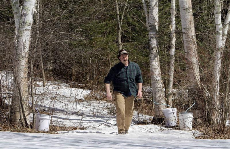 In this Wednesday, March 28, 2013 photo, David Moore of the Crooked Chimney sugarhouse checks the flow of his tapped white birch trees in Lee, N.H. Moore, New Hampshire's only known commercial birch syrup producer, got his start in 2008, when he was a student at the University of New Hampshire. (AP Photo/Jim Cole)