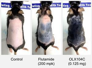 Hair regrowth in alopecia mouse model