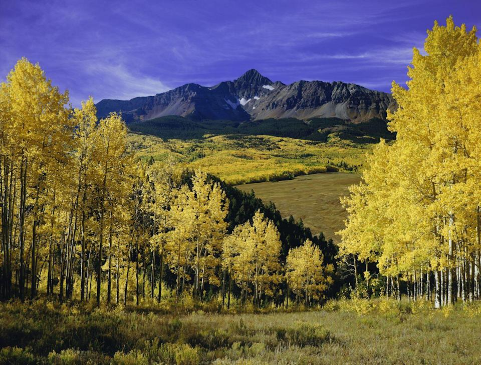 <p>It's impossible to think of Fall in the mountains without being reminded of Colorado's majestic yellow aspen trees, which bloom in bursts of sunny color every October. </p>
