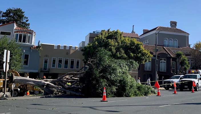 Ferocious winds have toppled trees in San Francisco's Marina District as millions of Californians up and down the state cope with raging fires, evacuations and power outages.