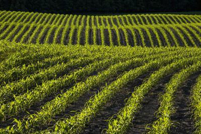 SOURCE™ gives growers a tool to reduce nitrogen fertilizer application without impacting yield.