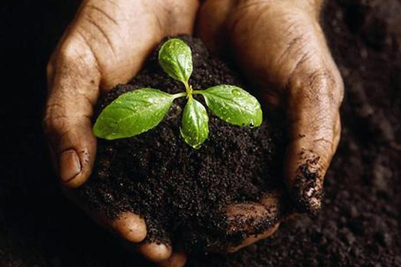 Sikh-Americans Pledge to Plant 100 Forests in India to Combat Climate Change