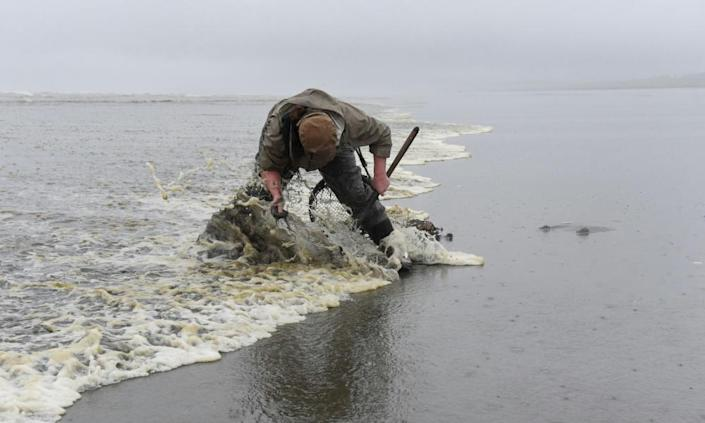 Becca Ralston digs for clams on Pacific Beach in Washington.