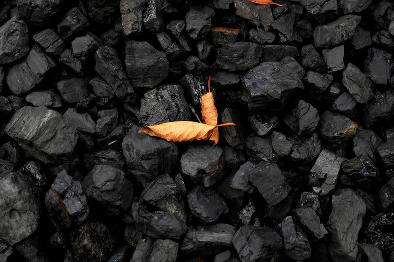 FILE PHOTO: FILE PHOTO: A leaf sits on top of a pile of coal in Youngstown, Ohio
