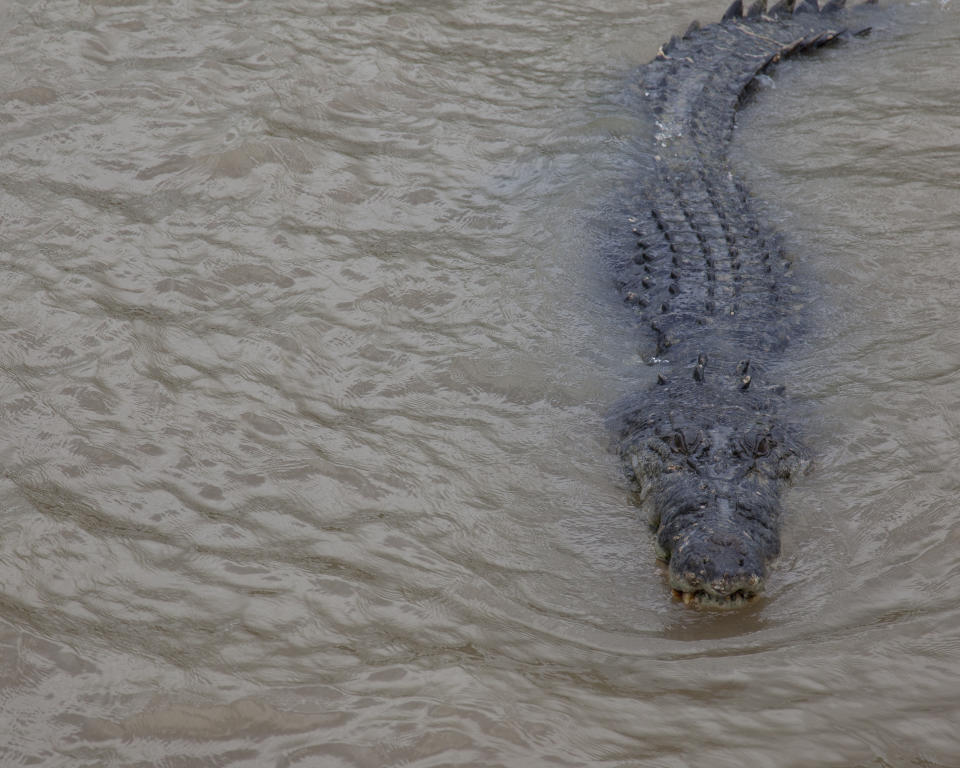 The area is known to have large crocodiles and one was taken from the area on Tuesday. Source: Getty Images, file