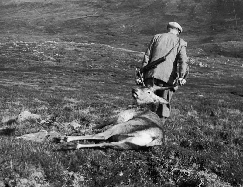 "Tillsley: ""I've seen stag hunts so, so many times that it should give me nightmares."" (Photo: Picture Post via Getty Images)"