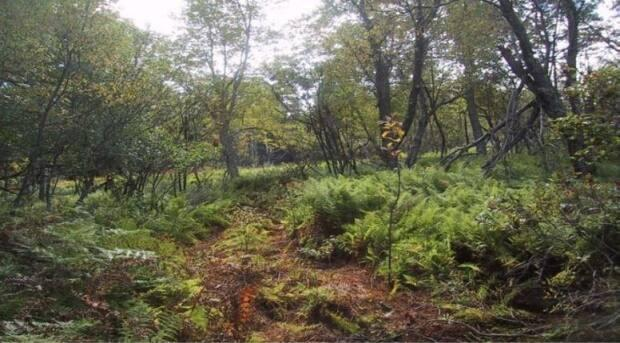 Former farmland on Long Island is being reclaimed by the forest