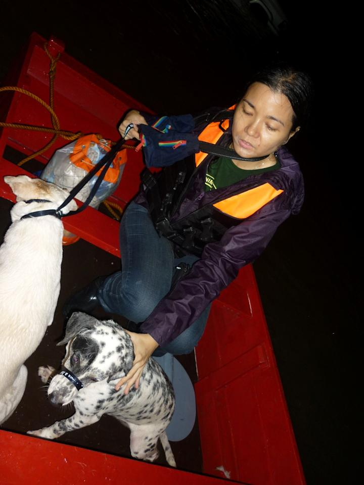 PAWS rescuers were able to borrow a wooden boat to transport the rescued dogs