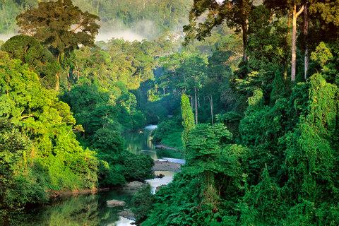 Lose yourself in the jungles of Borneo - Credit: Frans Lanting
