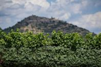 Some wine producers now grow grapes at the foot of the Pyrenees where temperatures are cooler (AFP/Josep LAGO)