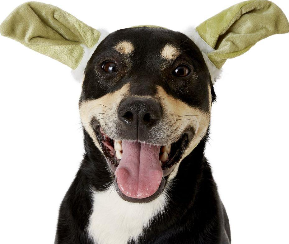 "Get this <a href=""https://fave.co/3lUjHry"" target=""_blank"" rel=""noopener noreferrer"">Rubie's Costume Company Yoda Ears Dog & Cat Costume for $5</a> at Chewy. It's available in S/M and M/L sizes with an elastic strap under the chin so it won't slide off."