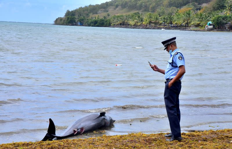 Autopsy finds wounds but no oil on dolphins washed up near Mauritius spill