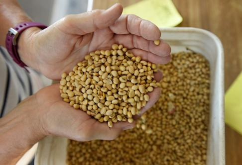 Soybean purchases have become one of the most crucial negotiating points in the US-China trade war. REUTERS/Dan Koeck