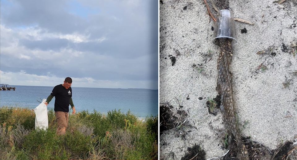 Clean-up volunteers were notified by a passerby about a lizard caught in a plastic cup. Source: Sea Shepherd