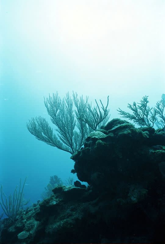 FILE PHOTO: Coral reefs in Belize