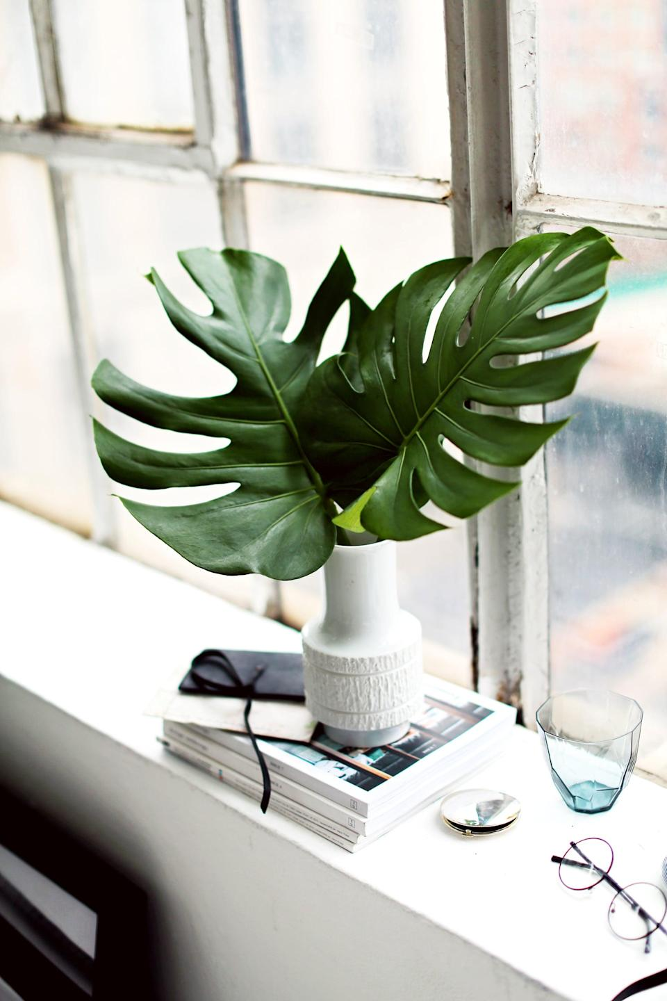 """<p>Next time you're dusting your house, don't forget to give those plants a good dusting too! Your houseplants don't just need their leaves to turn sunlight into energy - they actually """"breathe"""" through them as well. If their leaves become too dusty, they're unable to absorb the oxygen, turning your once-healthy plant into a sickly one. Make sure to keep the leaves clear of dust as often as possible - and a light mist of water isn't a bad idea either!</p>"""