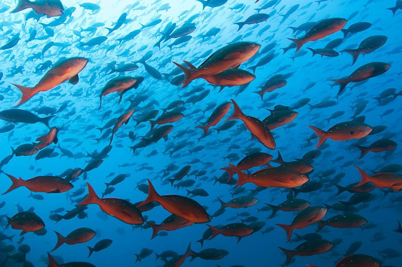 Malpelo is a small island in the East Pacific Ocean, located about 500 km west of the Colombian mainland. The UNESCO declared Malpelo as a world heritage site.