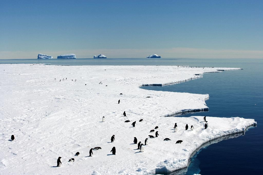 Australia and France kick off a fresh push to create a vast marine sanctuary in pristine East Antarctica (AFP Photo/-)