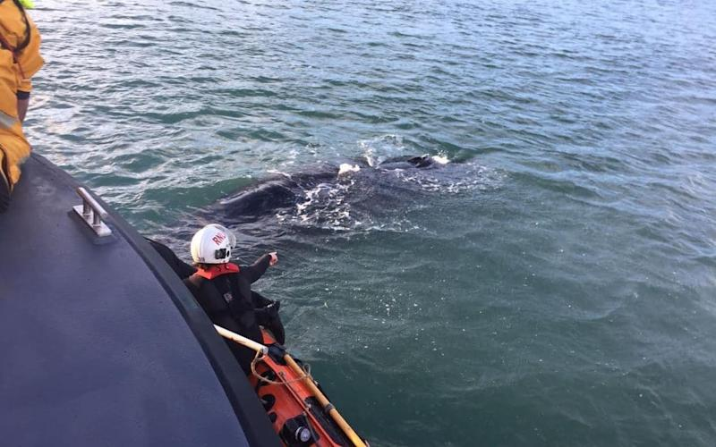 A lifeboat was sent to help the whale - SWNS - Bristol +44 (0)1179066550
