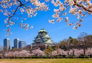 <p>As if you needed another reason to want to visit this fascinating country where ancient and modern meet in perfect harmony… Asia's first Rugby World Cup held there from September 20 to November 2. One of the dozen venues is Osaka – and on March 31, British Airways will restart direct services from Heathrow that it stopped 21 years ago, making it even easier to visit. Cherry blossom season is the most scenic time to visit, but the city's famed octopus dumplings and pancake-style okonomiyaki are there year-round. <em>[Photo: Getty]</em> </p>