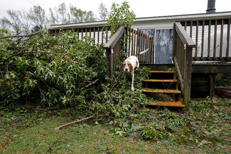 An abandoned dog that had been trapped in a cage filling with rising floodwater stands on the steps of its caretaker's home after volunteer rescuer Ryan Nichols of Longview, Texas, freed them in the aftermath of Hurricane Florence, in Leland, North Carolina, U.S., September 16, 2018. REUTERS/Jonathan Drake