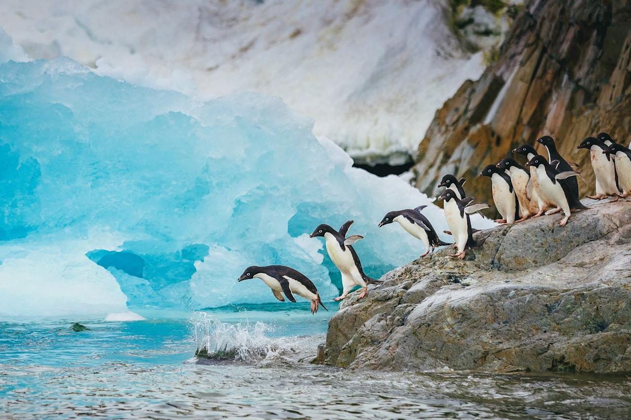"<p>The move releases air bubbles from their feathers, cutting down on drag and doubling or tripling their speed underwater, according to <a href=""https://www.smithsonianmag.com/science-nature/14-fun-facts-about-penguins-41774295/"" target=""_blank""><em>Smithsonian</em></a>. To make the leap back ashore, some smaller penguins can launch themselves <a href=""http://www.bbc.co.uk/blogs/wondermonkey/2011/07/penguins-take-to-the-air.shtml"" target=""_blank"">6 or 9 feet into the air</a> by speedily swimming to the surface and bursting up over the ice shelf.  </p>"