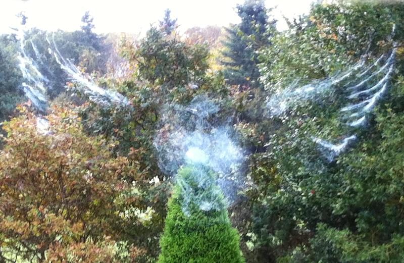Ghostly: The owl made this impression on the glass in Stourbridge, West Mids (SWNS)