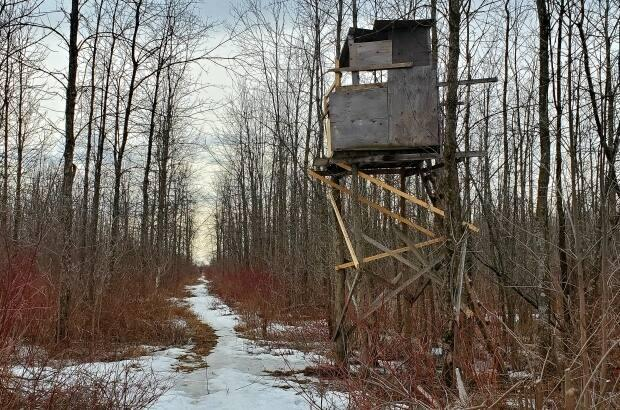 Deer stands, many fashioned out of logs and old lumber, are scattered throughout the Boisé Du Tremblay. There are also simpler stands of metal, ladders topped with a small seat.