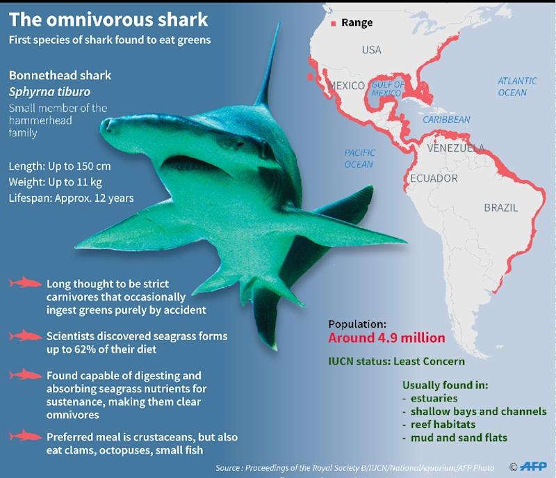 Scientists discover first known omnivorous shark