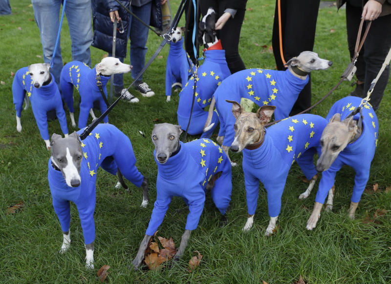 Whippets wear clothing with the EU flag during anti-Brexit protests in London, Saturday, Oct. 19, 2019. Britain's Parliament is set to vote in a rare Saturday sitting on Prime Minister Boris Johnson's new deal with the European Union, a decisive moment in the prolonged bid to end the Brexit stalemate. Various scenarios may be put in motion by the vote. (AP Photo/Kirsty Wigglesworth)