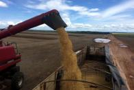 FILE PHOTO: A truck is loaded with soybeans at a farm in Porto Nacional