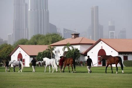 Dubai stables gives prize racehorses cryotherapy