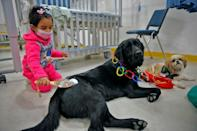 """""""We have noticed in more than 90 percent of the children that canine therapy helps to reduce anxiety,"""" pediatric surgeon Yolanda Poulin told AFP"""