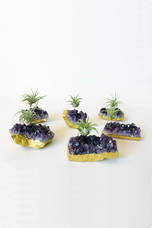 """<p>Balance your chakras and show off your air plants all at once with this glistening amethyst display. </p><p><a class=""""body-btn-link"""" href=""""https://go.redirectingat.com?id=74968X1596630&url=https%3A%2F%2Fwww.etsy.com%2Flisting%2F601877761%2Fzen-garden-amethyst-cluster-hippie-decor%3Fga_order%3Dmost_relevant%26ga_search_type%3Dall%26ga_view_type%3Dgallery%26ga_search_query%3Dair%2Bplant%2Bdisplay%2Bholder%26ref%3Dsc_gallery-2-13%26plkey%3Dc7c7d672b4f42fc234e6885e4b284dfc239dcae0%253A601877761%26frs%3D1&sref=https%3A%2F%2Fwww.elledecor.com%2Fdesign-decorate%2Froom-ideas%2Fg26873290%2Fbest-air-plants%2F"""" target=""""_blank"""">SHOP THE LOOK</a><br><em>Amethyst Air Plant Holder, $35</em></p>"""