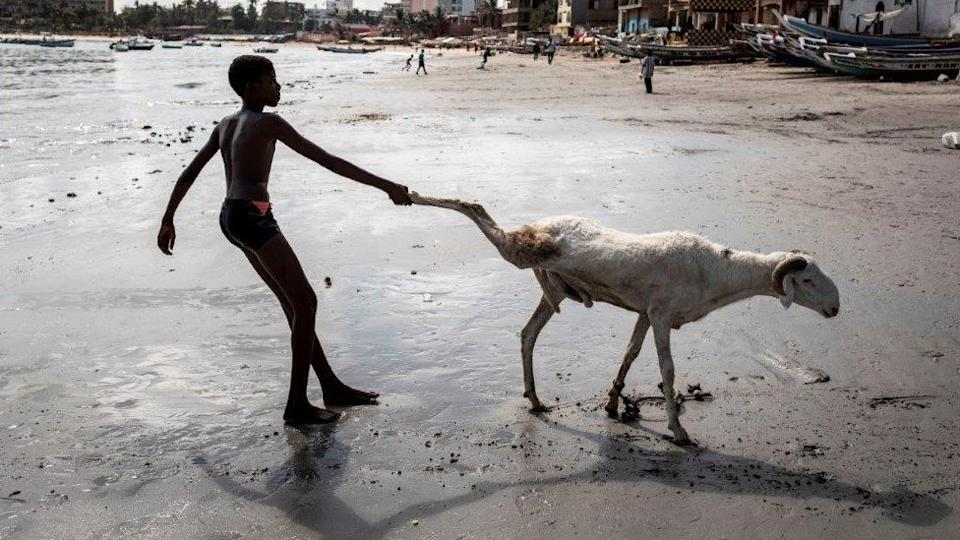 The day before, in Senegal's capital, Dakar, this young man is keen to get a ram to the sea to clean it up...