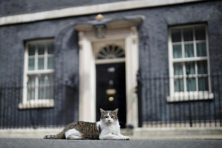 Larry the Cat has ruled the roost in Downing Street for a decade
