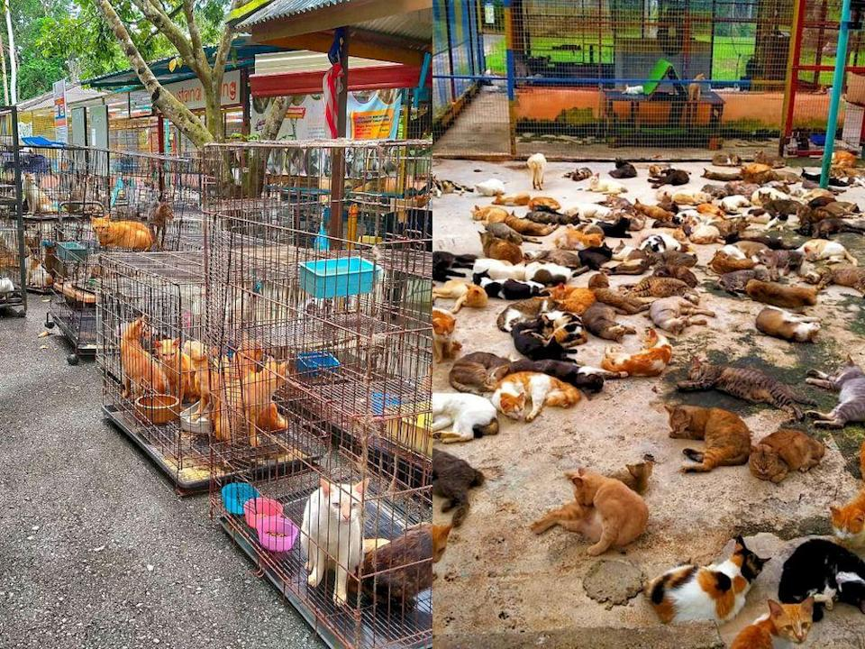 Fifty cats from Perak have been safely relocated to a Perlis cat haven in Perlis. — Photo courtesy of Facebook/ Bustana Kucing