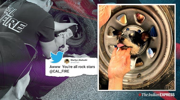 Puppy stuck inside tire, Puppy rescue video, California, Trending, Indian Express news