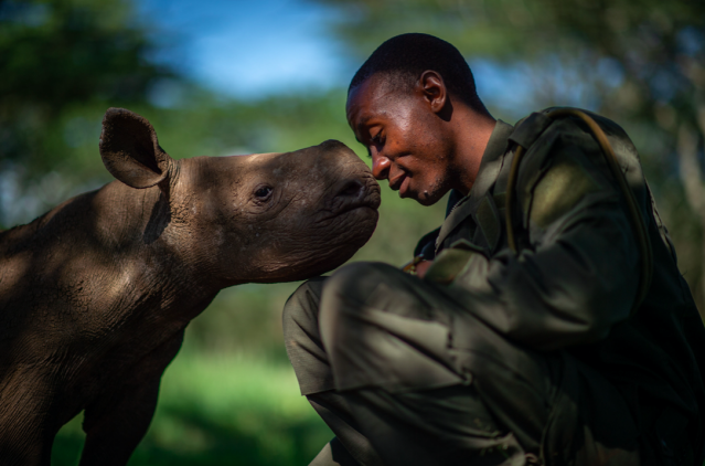 <em>The Surrogate Mother</em> shows ranger Elias Mugambi with an orphaned black rhino named Kitui at Lewa Wildlife Conservancy in northern Kenya. (Martin Buzora/Wildlife Photographer of the Year)