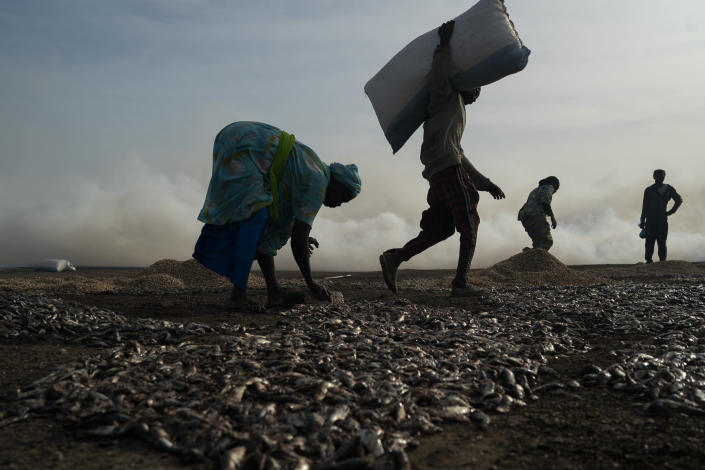 Ndeye Yacine Dieng, left, spreads the fish on the ground before processing it on Bargny beach, some 35 kilometers (22 miles) east of Dakar, Senegal, Wednesday April 21, 2021. Dieng's grandfather was a fisherman, her grandmother and mother fish processors. They baptized her with money from fish. They taught her the traditions and work of fish processing. (AP Photo/Leo Correa)