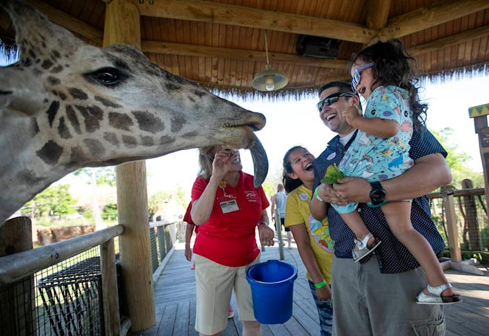 Maggie Castro, 2, is held by her father, Gorge, while she feeds a giraffe, and her sister Izabella, 11, watches during Dreamnight at the Zoo on Friday, when hundreds of families of children battling life-threatening conditions enjoyed a fun night out.