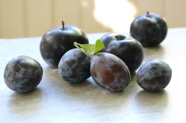 Plums. They're tasty in cakes, pies, tarts and so much more. (Julie Van Rosendaal - image credit)