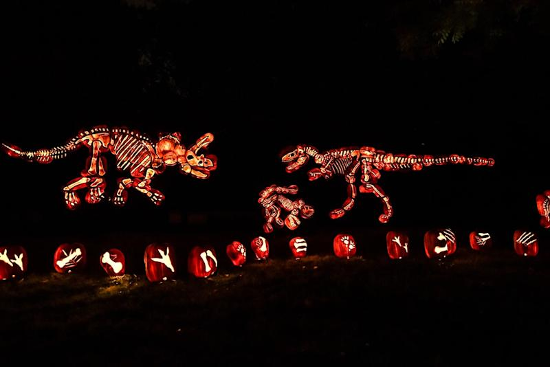 carved jackolantern display at night that creates dinosaur skeleton of t-rex and three-horned dinosaur