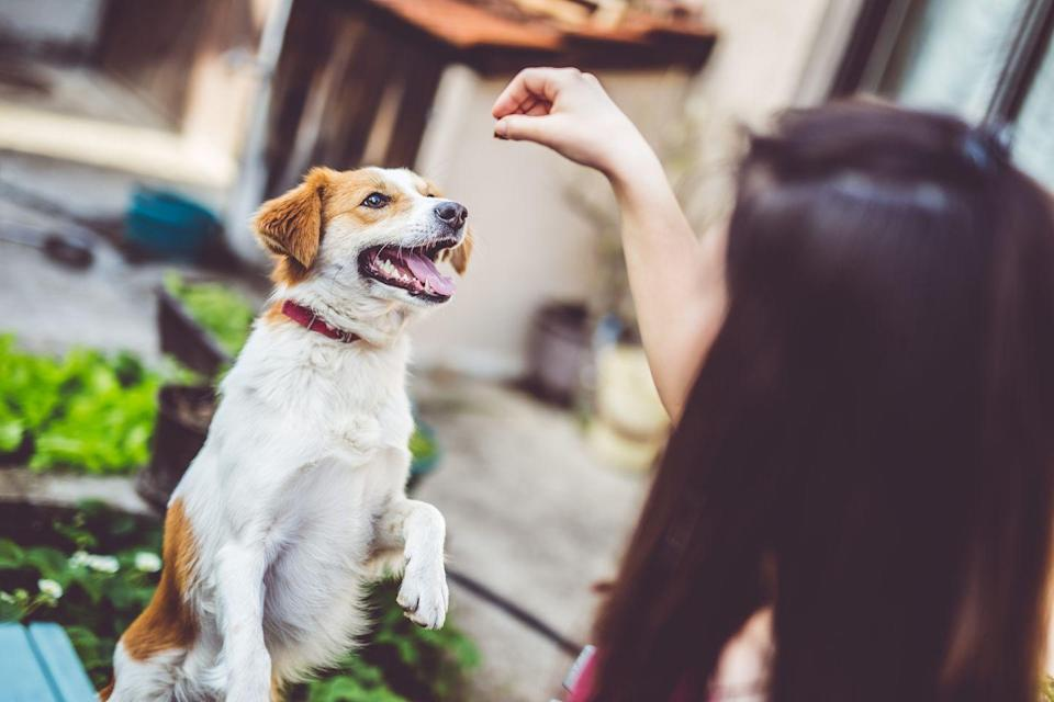 """<p>Before you head back to work, start taking steps to get your dog ready for alone time. This means taking """"no attention"""" breaks, listening to music through headphones, and giving them space. </p><p>""""During a few of your working hours, consider going into a bedroom or office without your pet and closing the door,"""" Mike Gould, founder of the doggie daycare Hounds Town USA, tells Woman's Day.</p><p>If you notice that your dog is being clingy when you are around during the work hours, ignore them or walk away. <br></p>"""