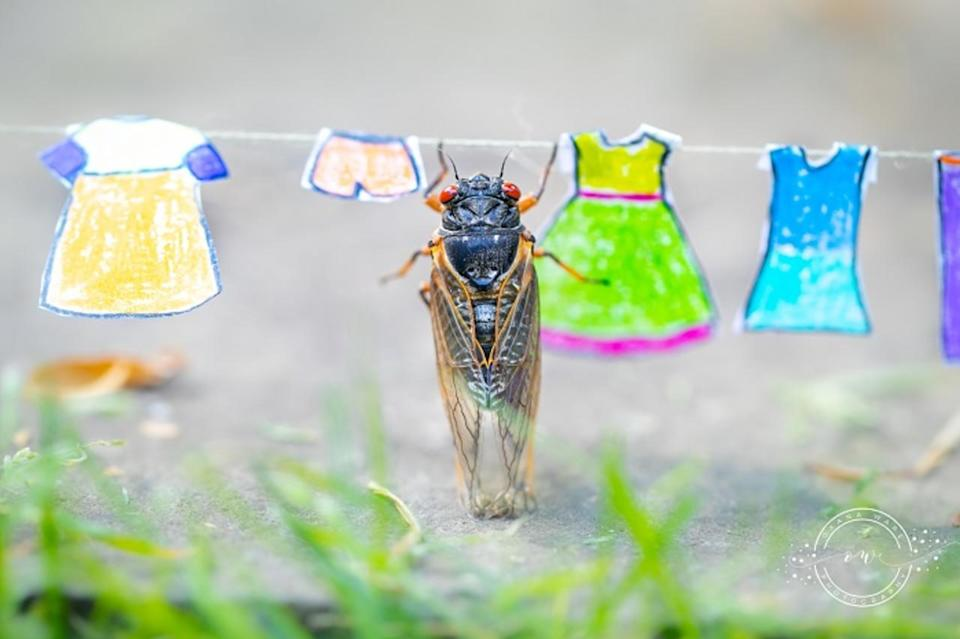 Cicadas in magical scenes: See the viral photos here