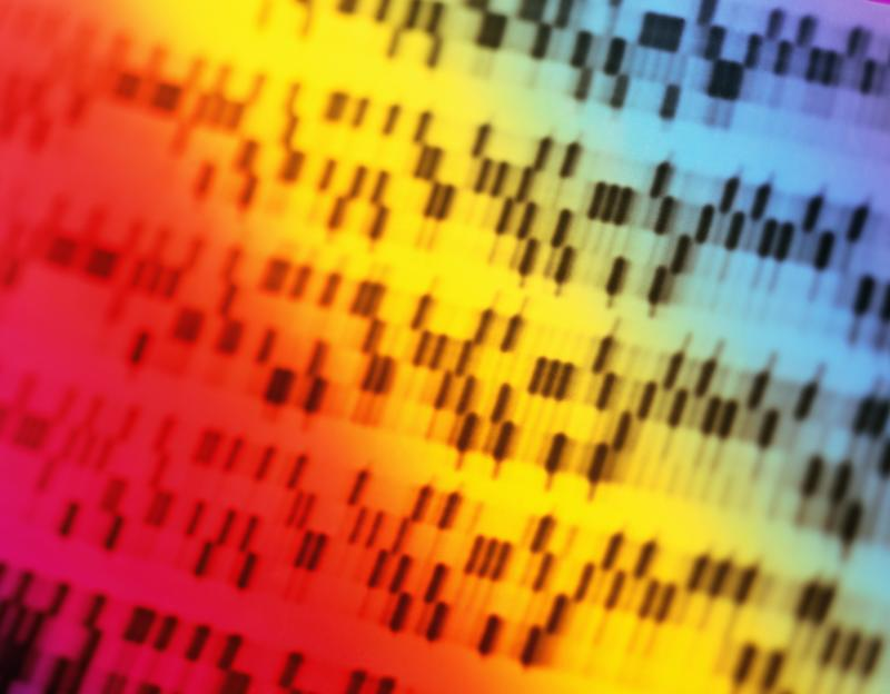 DNA sequencing gel, full frame (brightly lit, blurred motion)